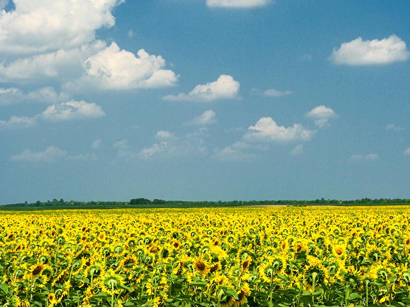 Novosadski informatičari pomažu poljoprivrednicima
