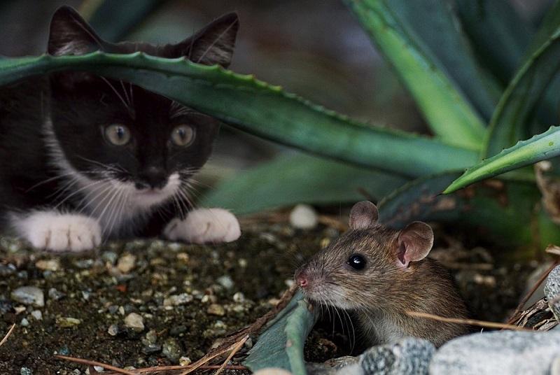 PANČEVO: U centru grada pretučena mačka i obešena o štrik za veš