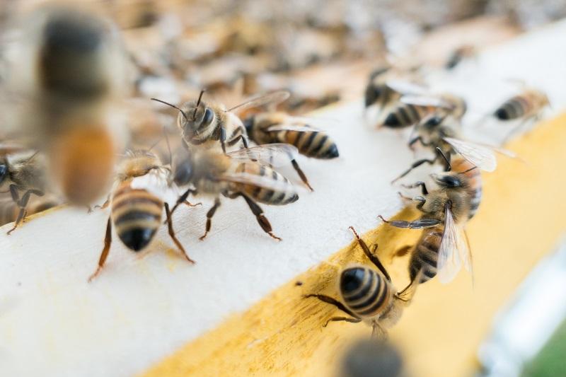 KAKO PROMENLJIVO VREME UTIČE NA PČELARENJE