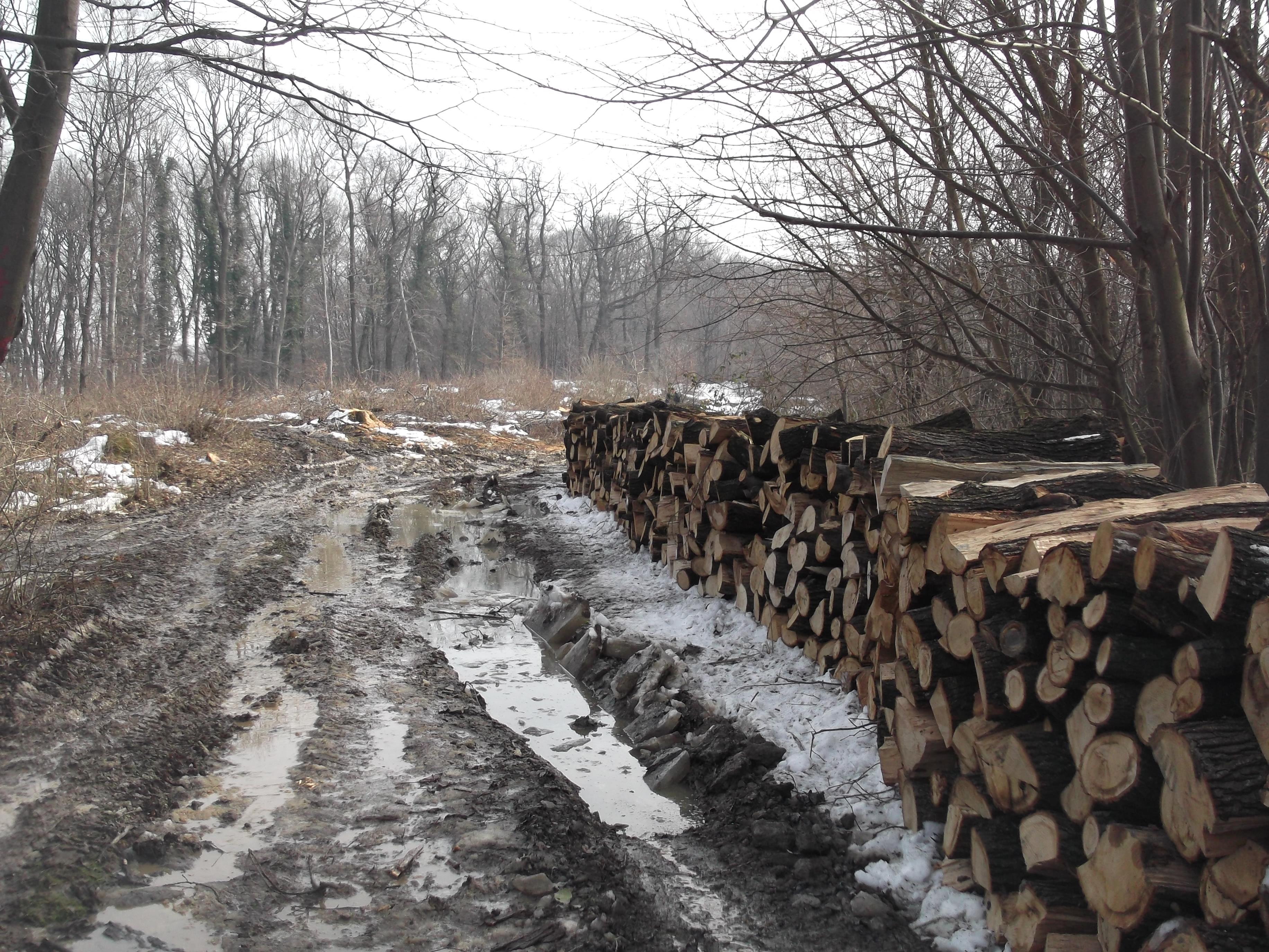 Povodom Svetskog dana šuma, 21. marta,
