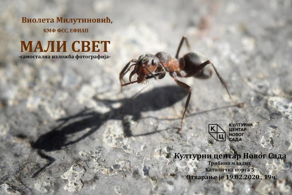 """Izložba fotografija """"Mali svet"""" autorke Violete Milutinović od 19. februara u klubu """"Tribina mladih"""""""
