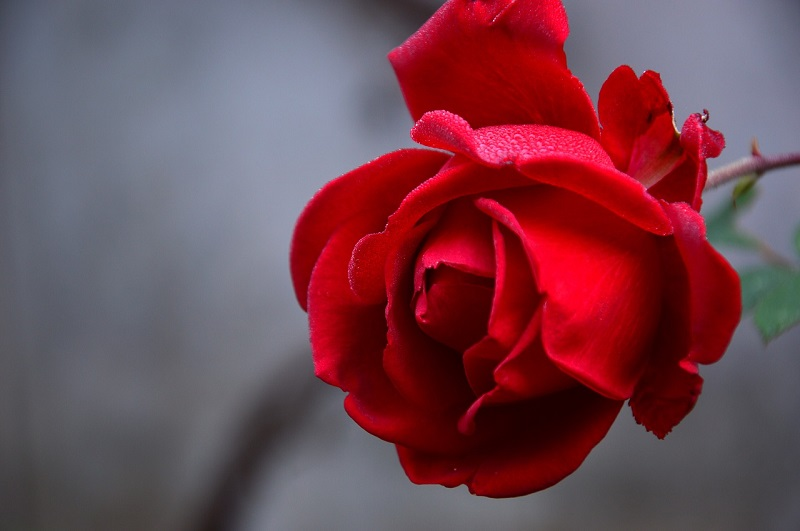 DANAS JE MEĐUNARODNI DAN ŽENA Svim damama redakcija Vojvodjanskih vesti želi srećan praznik